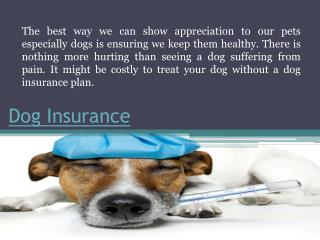 Dog Insurance Cost