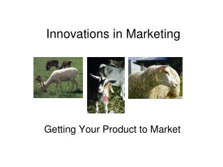 Innovations in Marketing