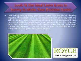 Look At the Ideal Lawn Grass in Surrey to Make Your Decision Easier