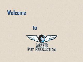 International Pet Transportation