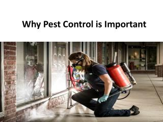 Why pest control is important