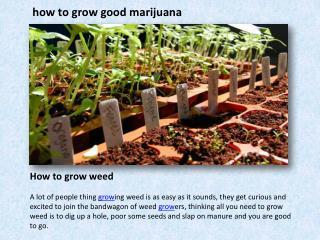 how to grow good marijuana