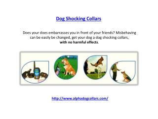 Dog Shocking Collars