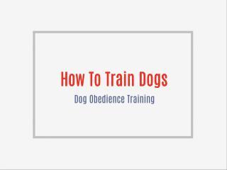 Free dog training video