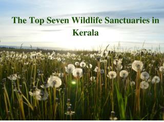 Top Seven Wildlife Sanctuaries in Kerala