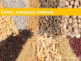 Seme, klijanje semena