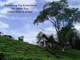 Puttabong Tea Estate from Jay Shree Tea- India's First & Finest