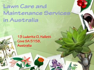 Lawn Care and Maintenance Services in Australia