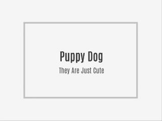 Puppy Dpgs