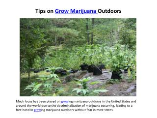 tips on grow marijuana outdoors
