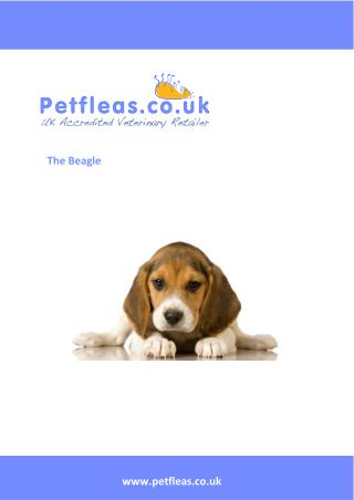Dog Breeds: The Beagle