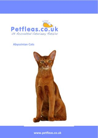 Cat Breeds: The Abyssinian