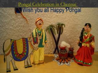 Pongal Celebration in Chennai