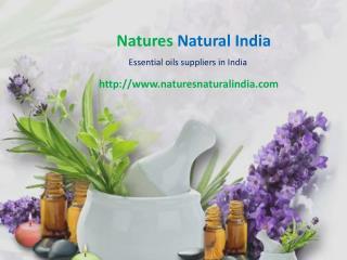 Buy Bulk Essential Oils at Naturesnaturalindia.com