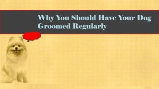 Why You Should Have Your Dog Groomed Regularly