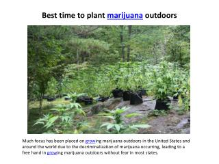 best time to plant marijuana outdoors