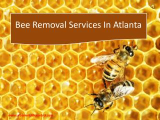 Bee Removal Services in Atlanta