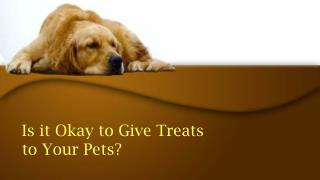 Is It Okay To Give Treats To Your Pets