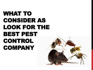 What to Consider as look for the best pest control company