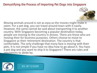 Demystifying the Process of Importing Pet Dogs into