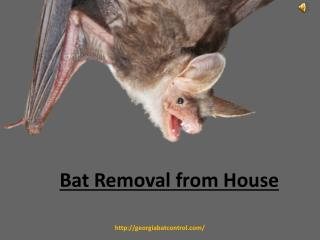 Removal of Bat From House
