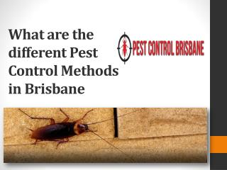 What are the different Pest Control Methods in Brisbane