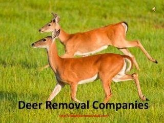Deer Removal Companies