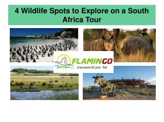 4 Wildlife Spots To Explore On A South Africa Tour