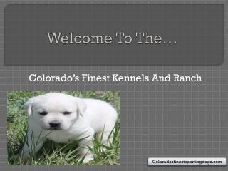 Colorado�s Finest Kennel And Ranch: The Best Place to Buy Pet for Home