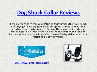 dog shock collars reviews