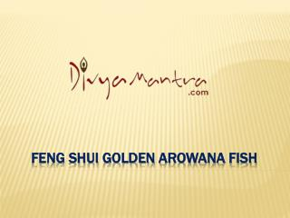Feng Shui Golden Arowana Fish