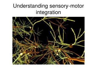 Understanding sensory-motor integration
