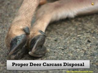 Proper Deer Carcass Disposal