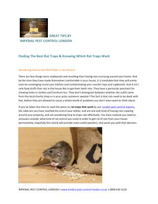 Finding The Best Rat Traps & Knowing Which Rat Traps Work