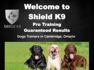 Shield K9 – Dog & Puppy Training Classes Kitchener/Waterloo