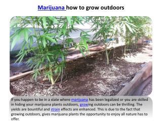 marijuana how to grow outdoors