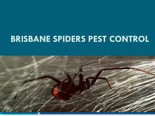 Brisbane Spiders Pest control