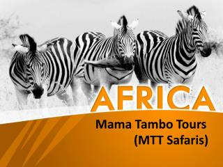 African Wildlife Safaris and Tours | MTT Safaris