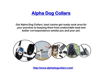 Alpha Dog Collars