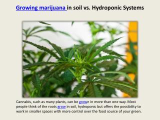 Ppt growing plants hydroponically vs in soil for Soil vs hydro