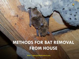 Methods for Bat Removal From House