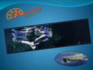 absolute-adventure-mexico.com/tours/snorkeling