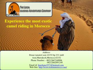 Experience the most exotic  camel riding in Morocco