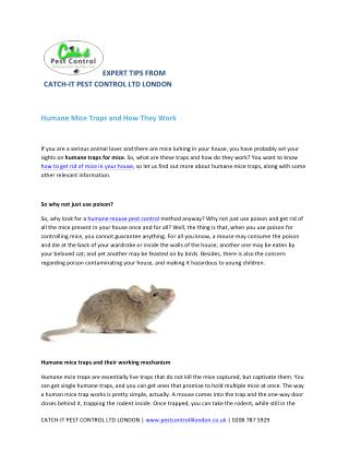 Humane Mice Traps and How They Work