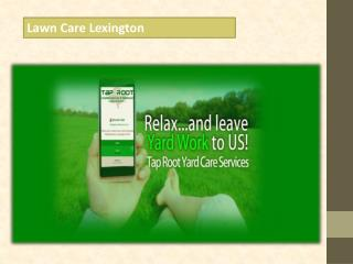 Lawn Care Lexington
