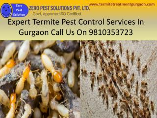 Expert termite pest control services in gurgaon call us on 9810353723