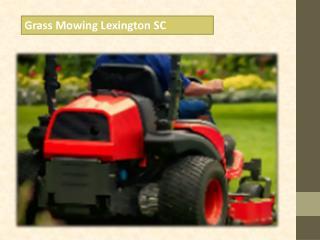 Grass Mowing Lexington SC