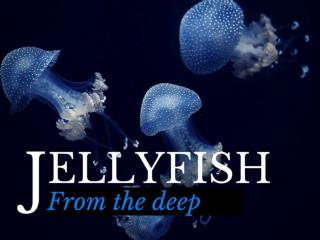 Jellyfish from the deep