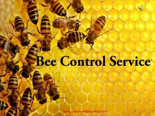 Bee Control Service