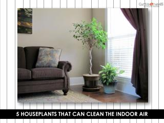 5 Houseplants that Can Clean the Indoor Air